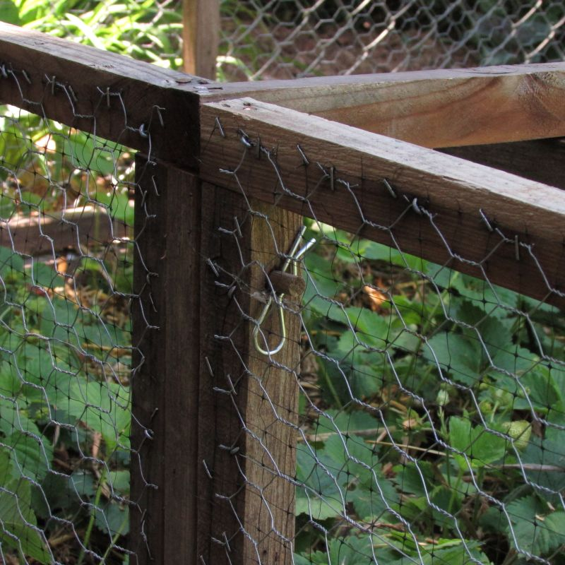 Squirrel-Proofing your Strawberry Bed