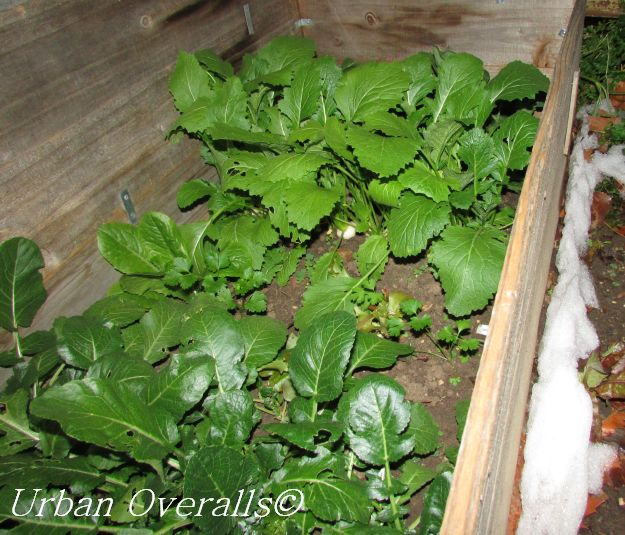 How to Build a Cold Frame at Home