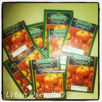 assorted tomato seed varieties