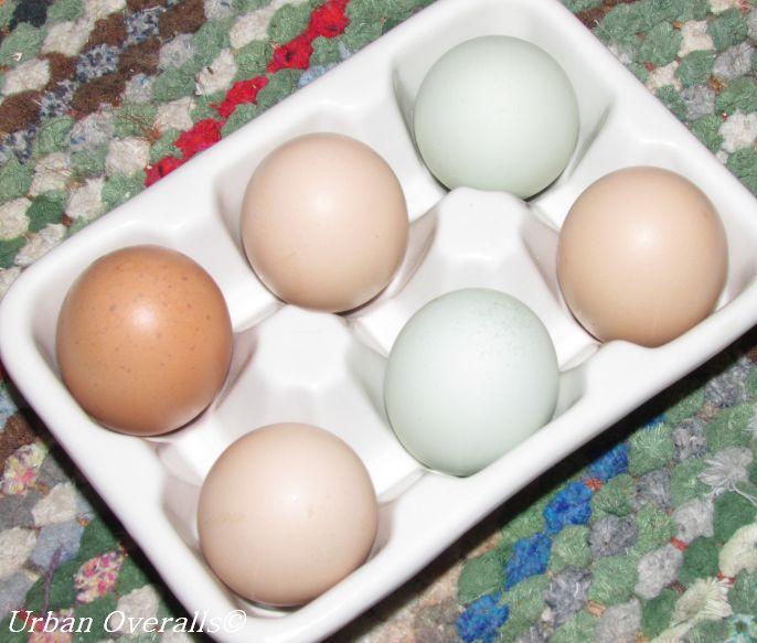 6 peewee eggs