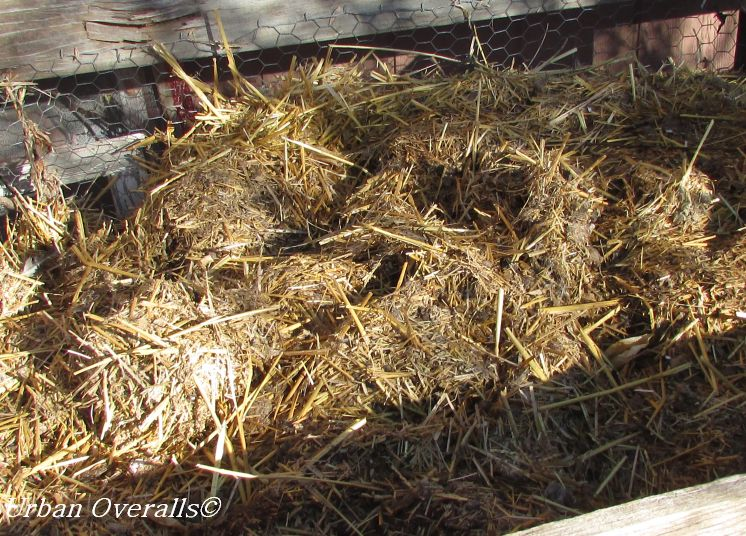chicken straw in compost bin