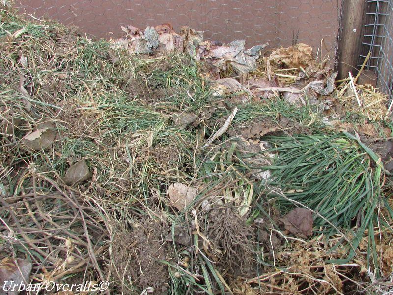 organic matter in compost bin