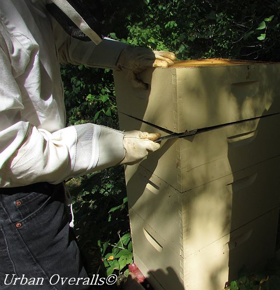 prying apart honey supers with hive tool