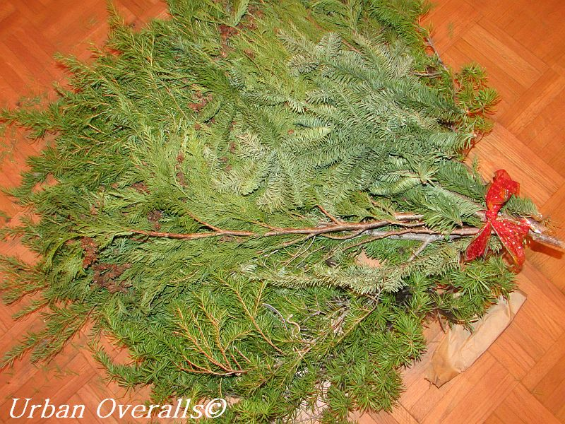 variety of fresh evergreens