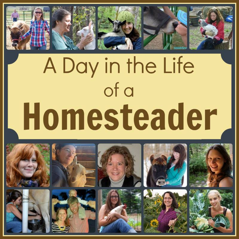A Day in the Life of an Urban Homesteader