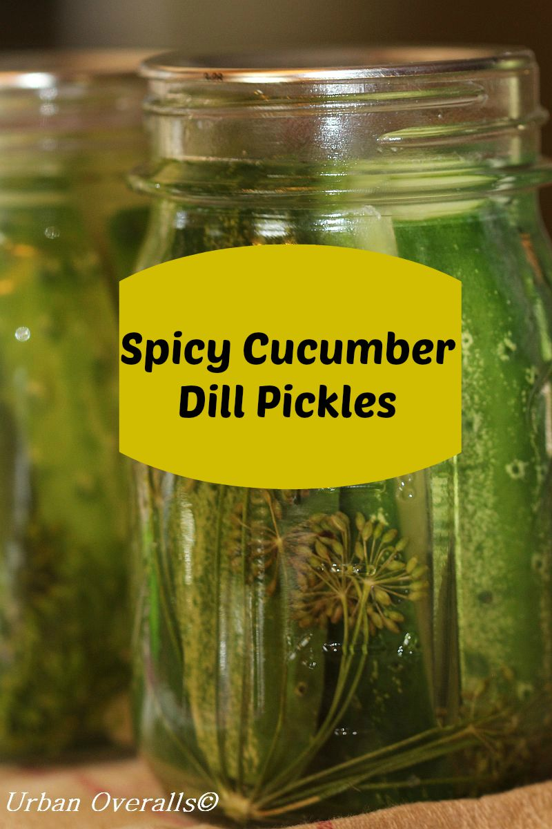 Home Canned Dill Pickles... - My Crazy Life as a Farmers Wife  |Canning Dill Pickles
