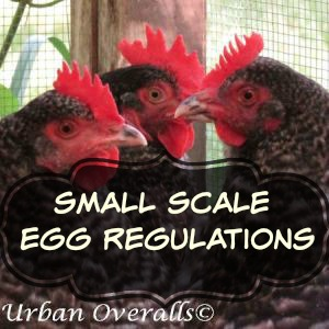 Small Scale Egg Sale Regulations