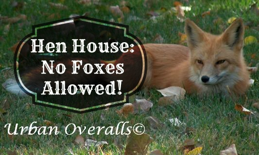 Hen House: No Foxes Allowed!
