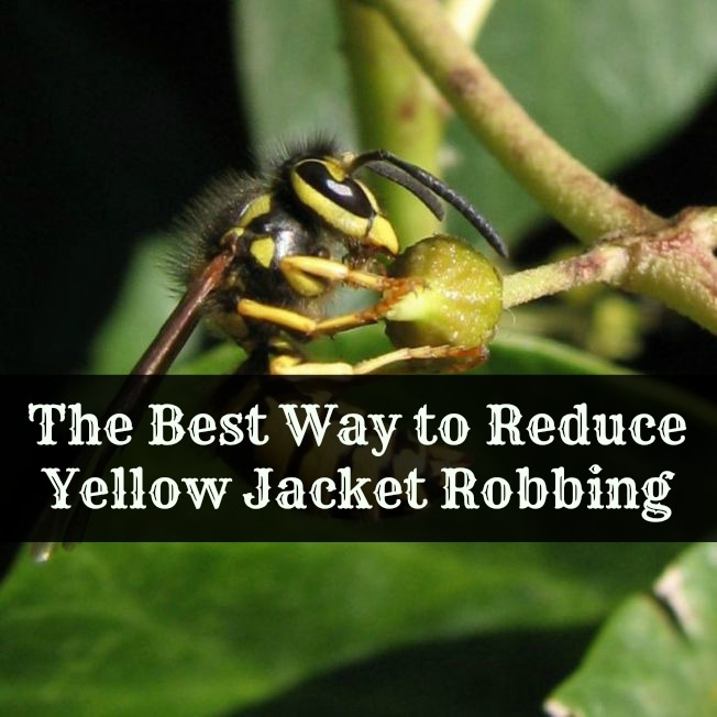 The Best Way to Reduce Yellow Jacket Robbing